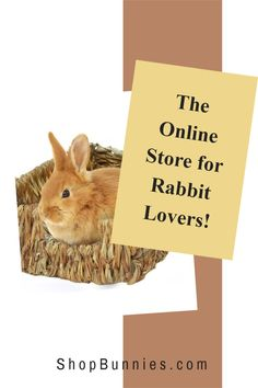 Do you know where to buy rabbit supplies online? Look at our store to find a new treat or toy for your bunny! #bunnies Where To Buy Rabbits, Cute Baby Bunnies, Cute Babies, Bunny Care, House Rabbit, Rabbit Toys, Boredom Busters, You Know Where, New Toys