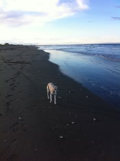 New Brighton Beach CHCH. Such a peaceful and lovely thing to do with your dog….walking on the beach.