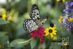 Featured on Groovy Butterflies! https://fineartamerica.com/groups/groovy-butterflies.html