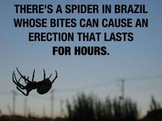 """Although Brazilian wandering spider (Phoneutria nigriventer) bites are intensely painful and """"can cause priapism, a potentially harmful and painful erection that can last for many hours and lead to impotence. True Facts, Funny Facts, Weird Facts, Random Facts, Crazy Facts, That's Weird, Strange Facts, Mind Blowing Pictures, Mind Blowing Facts"""