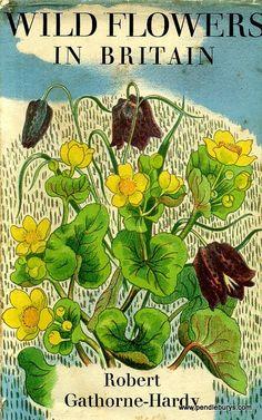 Wild Flowers in Britain   1938