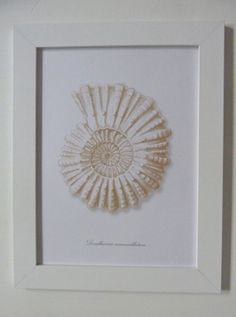 vintage shell framed sea life print - includes white wooden frame - coastal vintage - beach home decor