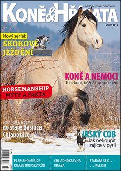Únor 2016 Appaloosa, Equestrian, Magazines, Horses, Animals, Journals, Animales, Animaux, Horseback Riding