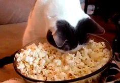 Lost in Popcorn
