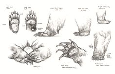 """suckmycockatoo: """" Fantastic reference for bears! """" Kingdom Animalia is a new blog that features reference and tutorials for drawing animals, along with inspirational art."""