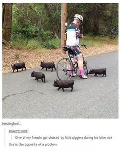 Death by tiny baby piggies