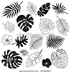 Flower Drawing Discover Isolated silhouettes of tropical palm leaves jungle leaves. Isolated silhouettes of tropical palm leaves jungle leaves. Vector set of hand drawn llustrations on white background. Watercolor Clipart, Watercolor Paintings, Leaf Drawing, Hand Drawn Lettering, Leaves Vector, Arte Floral, Free Vector Art, Line Art, Art Drawings