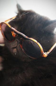 #sunglasses #cat #cats #holyshitcat
