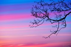 Branches by Roni Leppänen on 500px