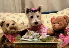 Bella from Westie Hugo-cute!  My pups would never sit still for this!