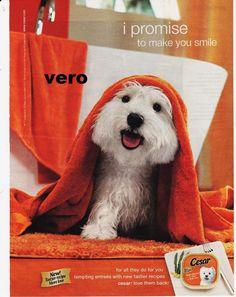 Cesar Dog Food Advert