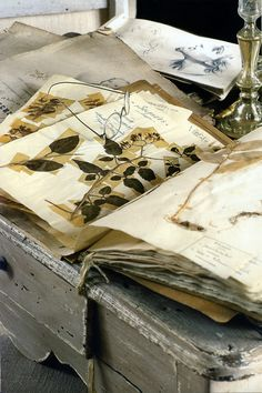 thisivyhouse:    Herbarium collection