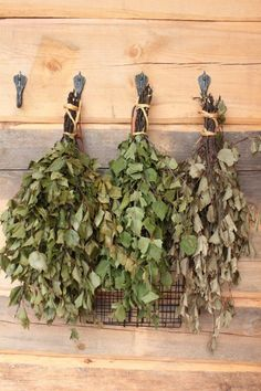 Birch bough for Saunas Traditional Saunas, Sauna Ideas, Sauna Design, Finland Travel, Natural Healing, Sunny Days, Cabins, Birch, Bathing