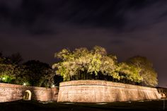 The (green) city walls of Lucca