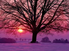 "Search Results for ""free winter sunset wallpaper"" – Adorable Wallpapers Winter Wallpaper, Sunset Wallpaper, Wallpaper Wallpapers, Iphone Wallpapers, Beautiful Sunset, Beautiful World, Simply Beautiful, Beautiful Things, Dark Tree"