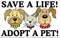 Pet Adoption - Search dogs or cats near you. Adopt a Pet Today. Pictures of dogs and cats who need a home. Search by breed, age, size and color. Adopt a dog, Adopt a cat. Miniature American Eskimo, Rescue Puppies, Beagle Rescue, Dog Search, Puppy Mills, Helping The Homeless, Mans Best Friend, Dog Pictures, Pet Adoption