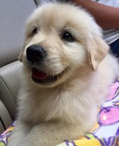 More Cute Golden Retriever dogs and puppies for dog lovers, check out this hilarious funny Golden Retriever mugs and shirts for golden retriever owners..  Golden Retriever a popular dog breed http://HarrietsDogGifts.com for funny Golden Retriever gifts for dog owners.
