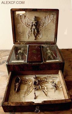 A very creepy DIY for a cabinet or antique lap desk of curiousities! Perfect for the front hallway or foyer for the Halloween party! Cabinet Of Curiosities, Assemblage Art, Weird And Wonderful, Mythical Creatures, Macabre, Vampires, Faeries, Dark Art, Wicca