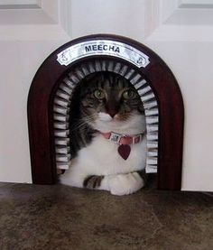 Lovely Cat Hole Indoor Cat Door   A Great Way To Make Sure Your Cat Is Never On  The Wrong Side Of The Door.