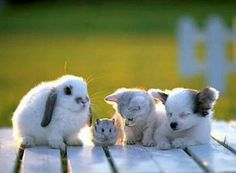 A bunny, a hamster, a kitten and a puppy make fast friends!! How cute is this!