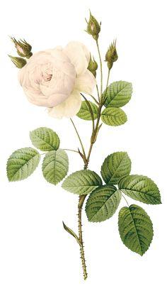 flower paint png - Cerca con Google