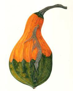 fullbloom:    Large gourd (14cm x 20.5cm) (via Paintings Prints & Postcards)