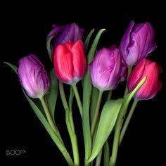 REMAINS of the DAY… Tulips by Magda Indigo on 500px