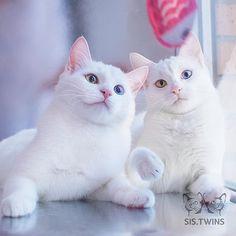 Sister Twins  Pretty Ladies