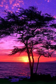 tree, purple, pink, orange, water, sky