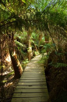 Mait's Rest rainforest trail, Otway National Park, Australia ♥ | ©