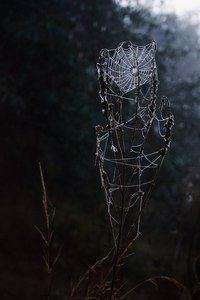 Season Of The Witch – A Southern Gothic Tale – Season Of The Witch – A Southern Gothic Tale – Samhain, Magick, Witchcraft, Wicca, Enchanted, Season Of The Witch, Witch Aesthetic, Gothic Aesthetic, Nature Aesthetic