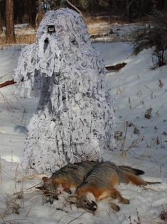 Snow Camouflage - Bing Images