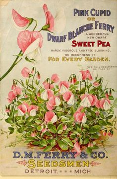 1899 - Seed annual, 1899. - Biodiversity Heritage Library. #BHLinbloom