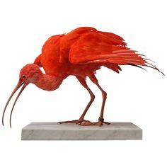 Taxidermy Study 'Scarlet Ibis' by Sinke & Van Tongeren | 1stdibs.com