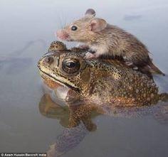 動物達の不思議な助け合い
