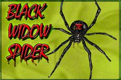 Black widow spider on pinterest spider webs spiders and for How to stop spiders coming in your home