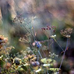 Nice to meet you. — © Marrgit last summer Deco Floral, Nature Plants, Butterfly Wallpaper, Foto Art, Belleza Natural, Nice To Meet, Amazing Nature, Flower Art, Wild Flowers