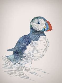 lovely puffin sketch