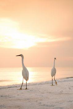 Sunset Walk by Nathalie Latic Coral +++ Pretty Birds, Love Birds, Beautiful Birds, Beautiful World, Perfect World, Belle Photo, Beautiful Creatures, Animal Kingdom, Coastal
