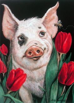 Pig Piglet with Red Tulips ACEO print from original oil by Joy Campbell Farm Paintings, Animal Paintings, Animal Drawings, Art Drawings, Illustrations, Illustration Art, Pig Crafts, Pig Drawing, Pig Art
