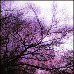 CED dark purple by stargardener