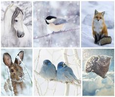 Be still and know that I am God. I Love Winter, Winter Is Coming, Collages, Animals And Pets, Cute Animals, Beautiful Collage, Free To Use Images, Winter Magic, Tier Fotos