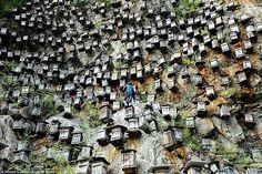 Comunidad de foros de Apicultura - Apicultura en China, imágenes espectaculares. - Encontrado en la red