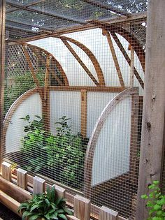 make a critter proof garden greenhouse, flowers, gardening, Corrugated polycarbonate panels were used to create a few cold frames that keep citrus trees such as Meyer lemon from freezing during winter months