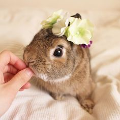 * 🐨「ぼくもかわいーのもらったでしゅ♡ありがとでしゅ♡」 @maron20111225 さんから🍏♡ #bunny #rabbit #kiwi #bigeyes #animal #coala #pets #bunnystagram #rabbitstagram #instapets #instarabbit  #動物 #うさぎ #キウイ #コアラ  #canonEOSM2