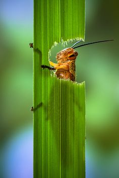 ♀ Insects micro photography Window of Life by Lessy Sebastian green