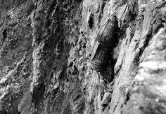 169 best Normandy Pointe du Hoc images on Pinterest | Normandie ...