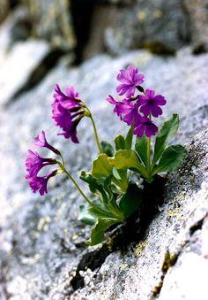 Фиолетовые Цветы, Весенние Цветы, Дикие Цветы, Красивые Цветы, Экзотические Цветы, Розовые Розы, Цветочный Магазин, Синие Цветы, Огородничество