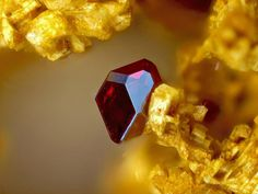 Cuprite on Gold !!!! Locality: Clara Mine, Rankach valley, Oberwolfach, Wolfach, Black Forest, Baden-Württemberg, Germany  Cuprite Cristal.  Field of view: 1,23 mm  Photo: Gerhard Niceus