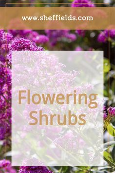 Get Inspired with Flowering Shrubs this Spring in Your Garden #seeds #plantingtips #flowers #flowerseeds Herb Seeds, Garden Seeds, Planting Seeds, Seeds For Sale, Grass Seed, Flowering Shrubs, Flower Seeds, Natural Wonders, Vines